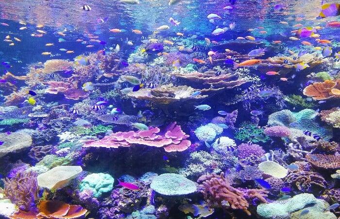 Asyiknya Bali Snorkeling