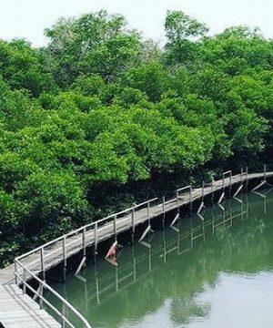 wisata hutan mangrove bali